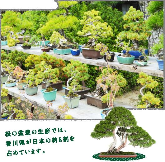 世界から熱い視線が注がれるBONSAIアート。盆栽