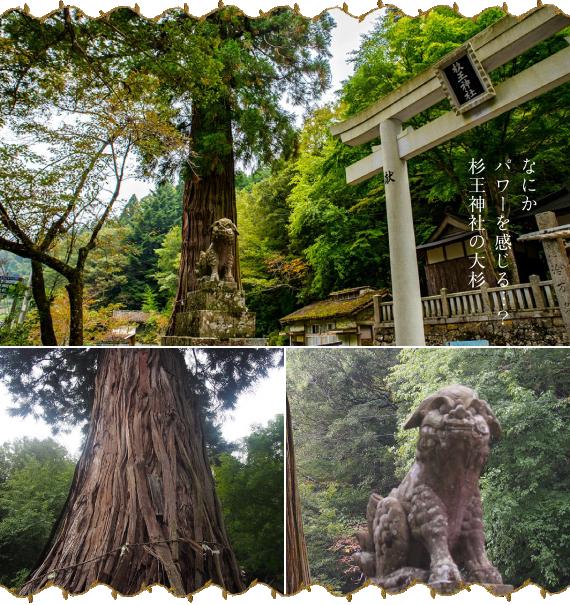 杉王神社の大杉