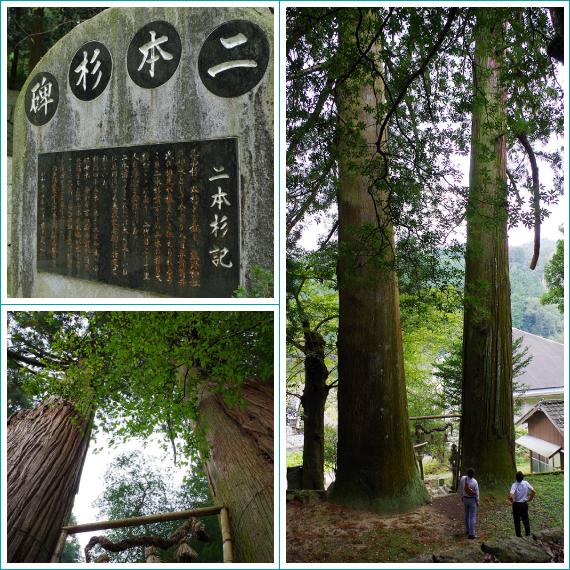 熊野神社の二本杉